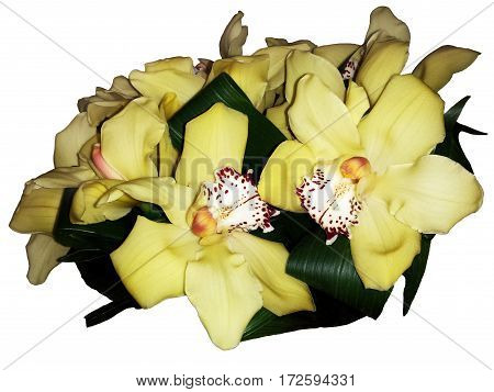 Yellow streaked orchid flower isolated. Close up of Orchids flowers and green leaves background.