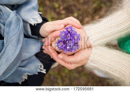Hands of young woman and kid boy holding beautiful snowdrops. Top view on people's hands with first spring flowers in a forest. Beginning of spring in a forest. Focus on snowdrops. Family walk.
