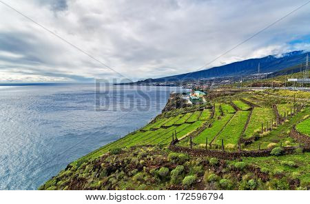 Panoramic sea views and terraces of agriculture under gloomy sky at Tenerife, Canary Islands, Spain