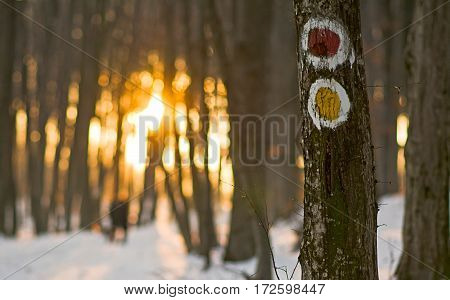 Yelow and red tourist sign on the tree in winter forest