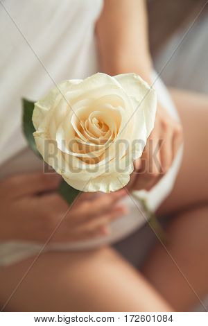 Closeup of beautiful white rose in hands of young sitting woman. Girl with flower.