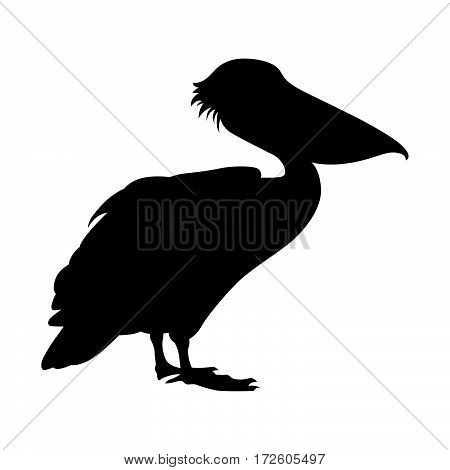 Pelican ( shade picture ) on white background