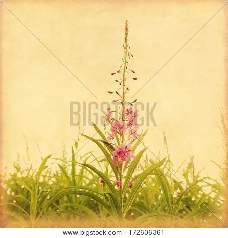 Fireweed field in grunge and retro style.