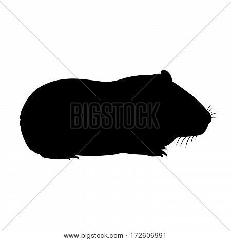 Guinea pig ( shade picture ) on white