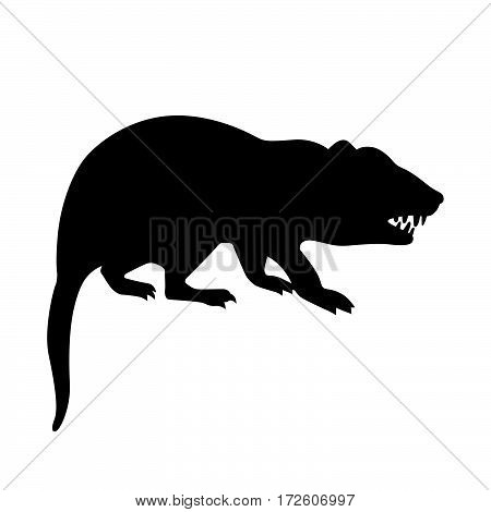 Tasmanian devil ( shade picture ) on white