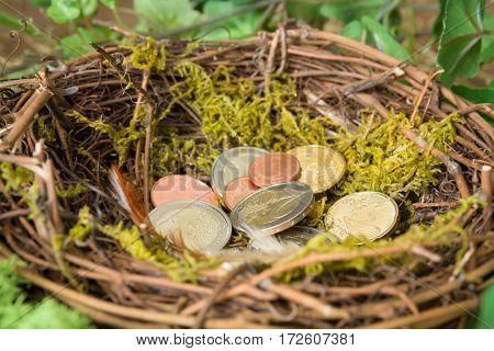 Saved money hidden in a bird's nest