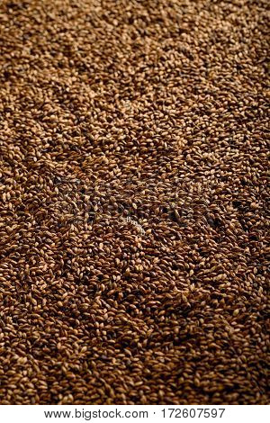 Close photo up of malt grains, expensive malts for darker beers
