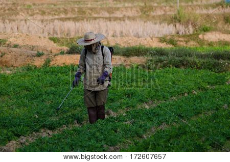 The spraying of pesticides Seedling of chinese kale.