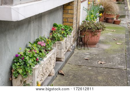 colorful flowers in pots in front of the building two rectangular pots carvings and other round pots flowers under the window sill and on the sidewalk home green