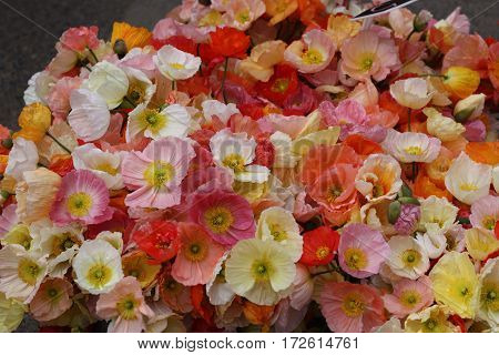 Delicate, fragrant flowers in white, yellow, shades of pink and red at a farmers market