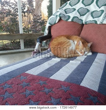 Orange and white cat curled up on front porch American flag blanket