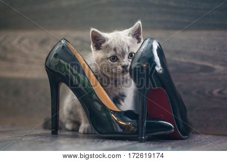The kitten plays with a large women's shoes
