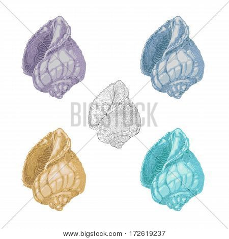 Set of Cockleshell . Several variants not bright, pastel colored shells on a white background. Vector illustration
