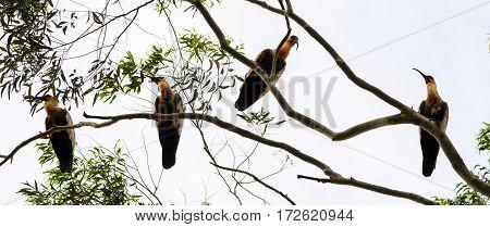 Group Of Beautiful Herons Of The Pantanal In Brazil