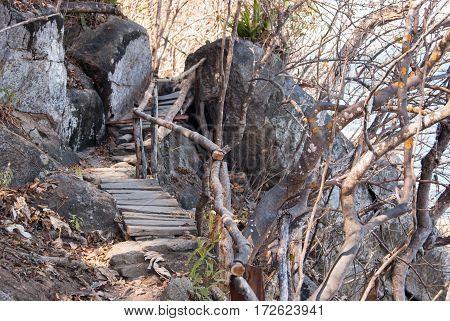 A rough trail through the rugged woods