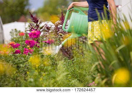 Young woman watering plants and flowers in the garden at summertime. Gardening girl watering flowers with blue watering can on a sunny day. Working in the garden.