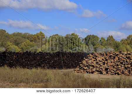 Image of logs being watered at a lumberyard in Meridian Mississippi