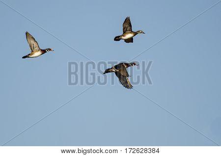 Wood Ducks Flying in a Blue Sky