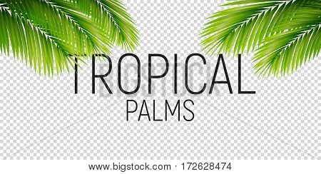 Tropical leaves. Vector trendy palm leaves isolated