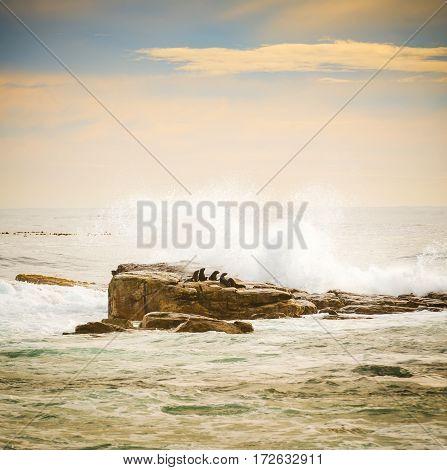 Brown Fur Seals