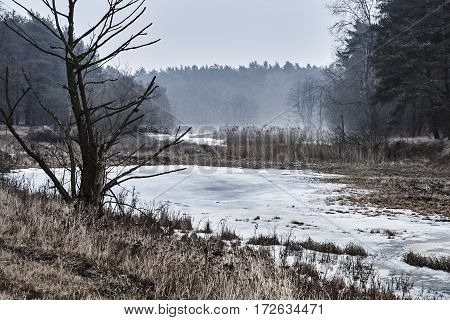 Frozen pond in the forest during winter in Poland