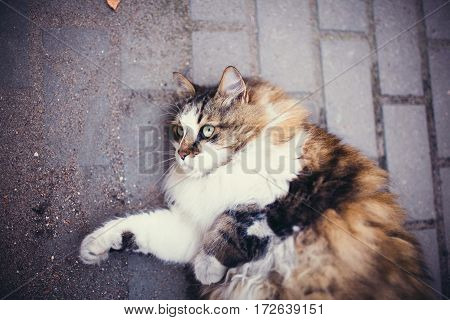 Fluffy And Contented Cat Lying On The Ground