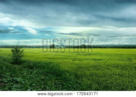 Yellow Meadow On A Background Of Relief Clouds