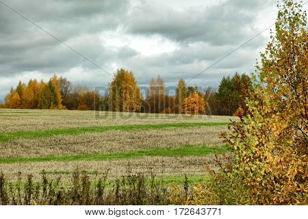 Clouds Over Autumn Trees And Striped Field