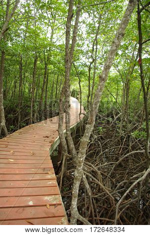 Wood bridge in mangrove forest Kohchang Trat Thailand