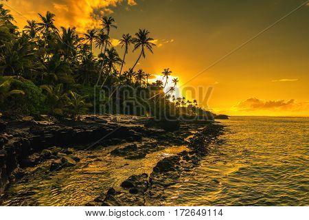 Coconut palm trees on the beach during the sunrise on Upolu, Samoa Islands