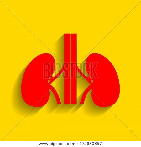 Human kidneys sign. Vector. Red icon with soft shadow on golden background.