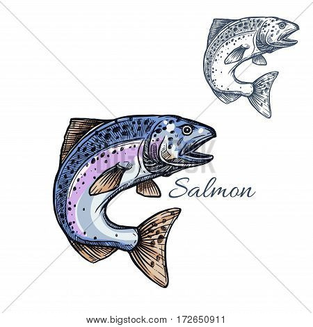 Salmon sketch vector fish icon. Isolated humpback or pink salmon or sockeye marine ocean or sea fish species. Isolated symbol for seafood restaurant sign or emblem, fishing club or fishery market