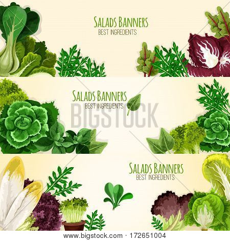 Lettuce salads and vegetables vector banners of mangold kale or collard, chicory and spinach, arugula, lollo rossa and radicchio, romaine and pak choi or sorrel, swiss chard batavia and gotukola