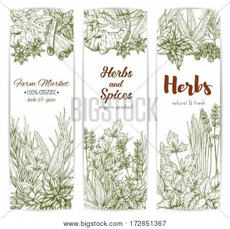 Herbs and seasonings sketch vector banners set of spice condiments anise and oregano, basil, dill and parsley, ginger and chili pepper, rosemary and thyme, sage bay leaf, vanilla or mint and cinnamon