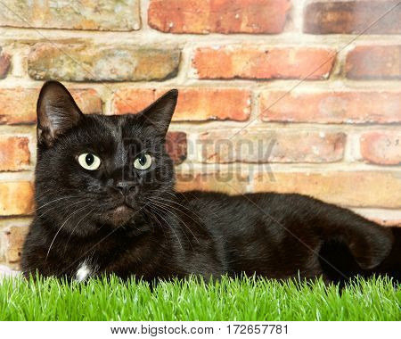 Black tabby cat sitting in grass in front of a brown and red brick wall looking slightly to viewers right.