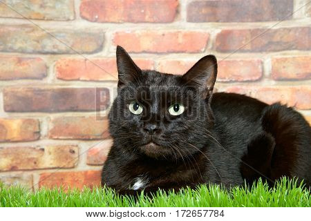Black tabby cat sitting in grass in front of a brown and red brick wall looking slightly to viewers left.