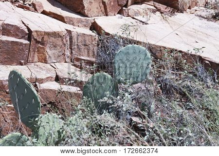 Cacti And Monolithic Rocks