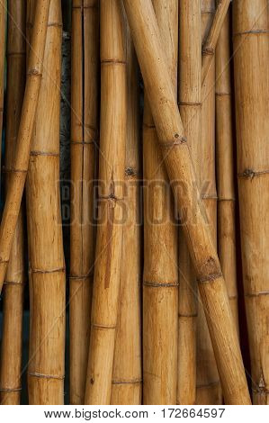 the quality natural bamboo yellow color background