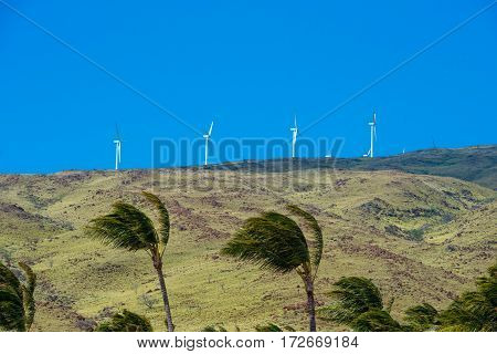 Palm trees bending in the wind with windmills in the background