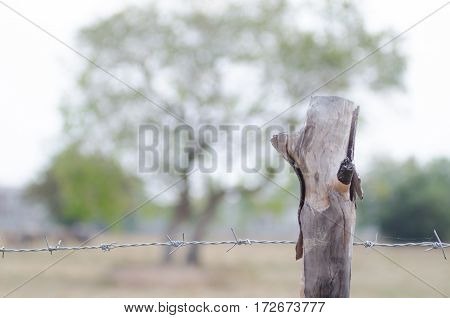 Stretched barbed fence with trees around the farm Saturday morning shooting light contrasting with beautiful bokeh background field.
