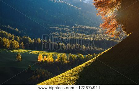 Sunny day in Ssnta Magdalena village. Picturesque and gorgeous scene. Location famous place Funes valley, Dolomiti Alps. Province of Bolzano - South Tyrol, Italy. Europe. Beauty world.