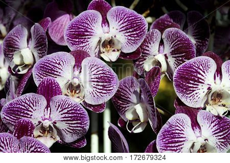 bunch of orchid flower blossoms close up blurred flower background selective focus soft focus