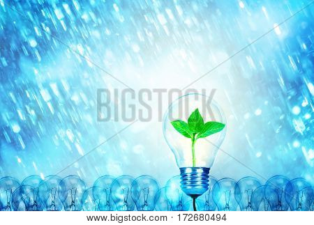 Outstanding creative idea for eco friendly background concept . Nature Tree leaf inside one Light bulb glowing among a group light bulbs and heavy rain