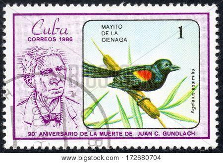 UKRAINE - CIRCA 2017: A stamp printed in Cuba shows a Bird Agelaius assimilis. Mayito de la cienaga. the series The 90th Anniversary of the Death of Juan C. Gundlach circa 1986