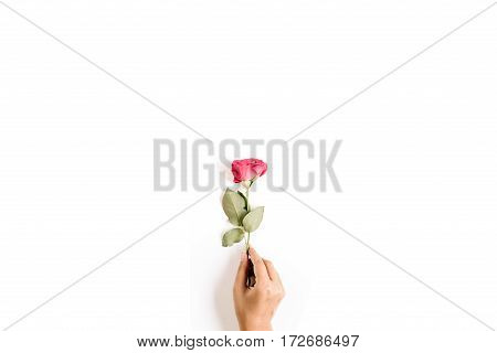 Beautiful red rose flower in girl's hand isolated on white background. Flat lay top view. Mothers day or valentines day background.
