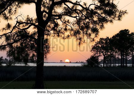 Iconic sunset through silhouetted pines over a bayou in Panama City, Florida