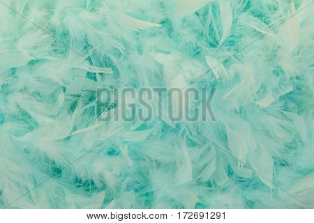 Turquoise blue feathers from a boa in a full frame image