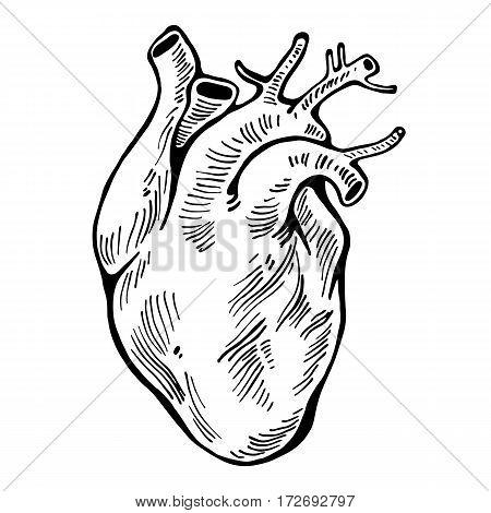 Human heart black line, tattoo, organ Vector illustration