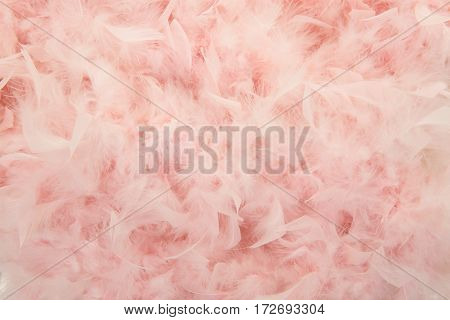Pastel pink feathers from a boa in a full frame image