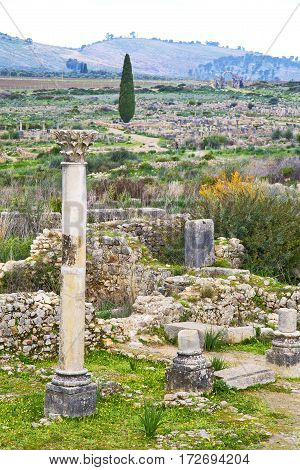 Volubilis Morocco   Site